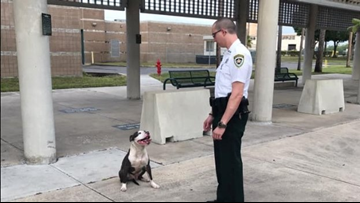 Dog waits outside of jail to find help getting home