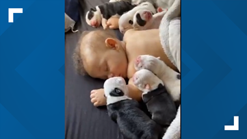 Woman shares adorable video of baby sleeping with bulldog puppies