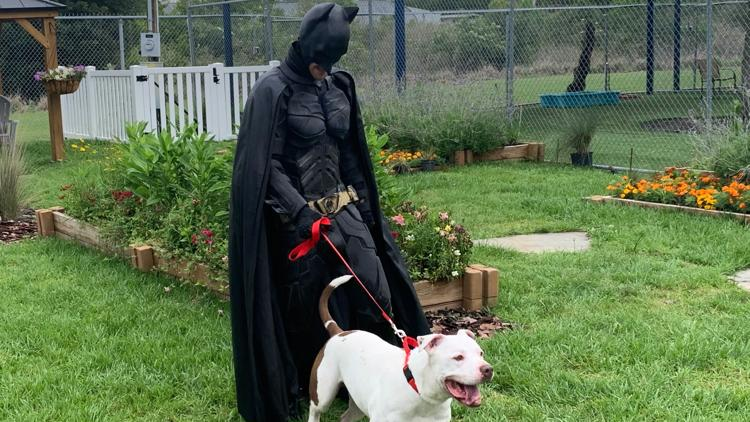 Florida dog is being reunited with its owner with the help of Batman