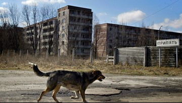 People are adopting dogs from radioactive disaster zone