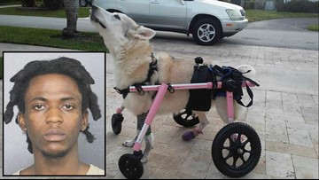 Arrest made after dog in wheelchair found dead in stolen car