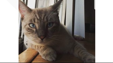 Cat traveling 3,000 miles to reunite with owner after 2 years apart