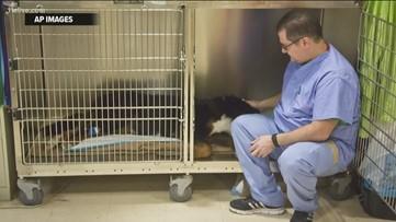 Children's cancer treatment drug shortage could impact your pets