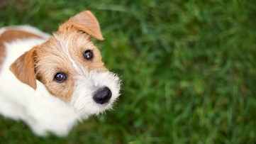 Why do we typically outlive our pets?