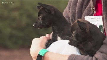 Georgia first lady hosts adoption day for pets