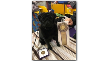 Georgia school therapy dog receives 'Award of Merit' at Westminster Dog Show