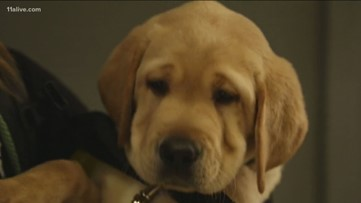 What's the difference between a service dog, therapy dog and emotional support dog?