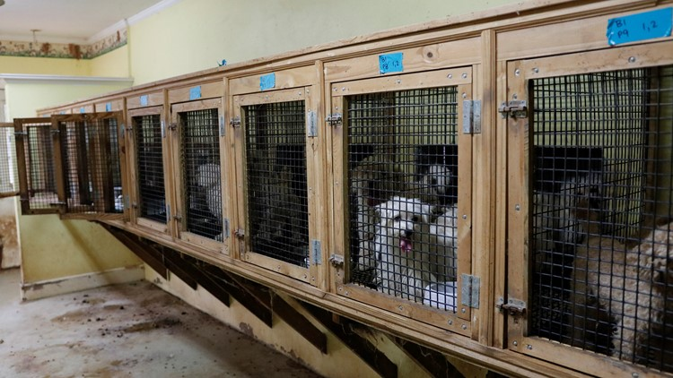 Monroe County Puppy Mill