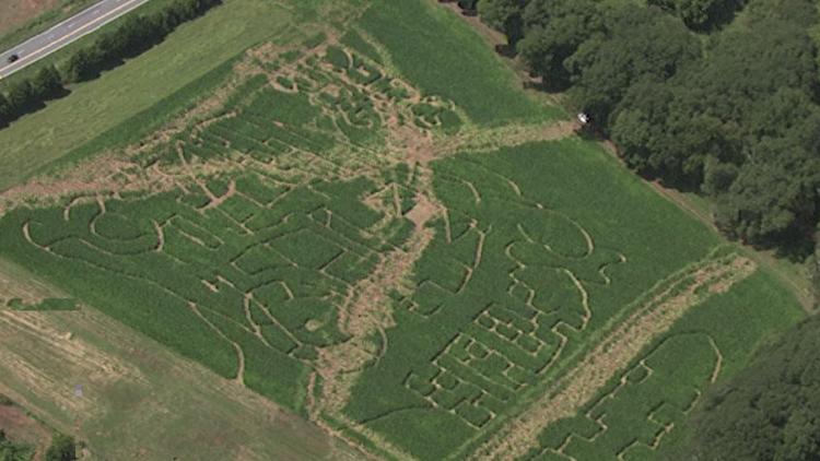 Papa Pat's Corn Maze