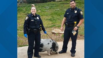 Police discover pig named Bacon roaming Brookhaven streets