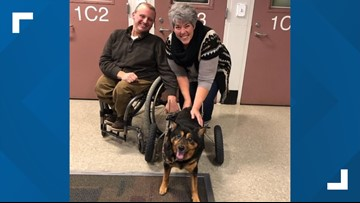 'He's me': Dog in wheelchair adopted by man with similar paralysis