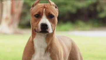 Show dog who went missing at Atlanta airport found!