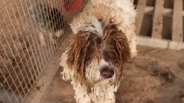 44 dogs rescued from apparent puppy mill in Lamar County