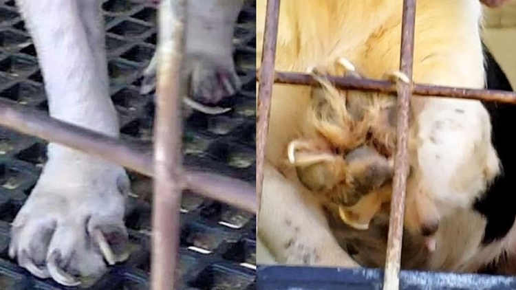 Caged in Cruelty Long County nails