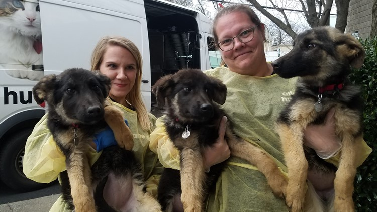 44 dogs rescued from apparent puppy mill in Lamar County ...