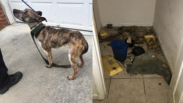 Owner of dog found locked in abandoned house arrested in Virginia
