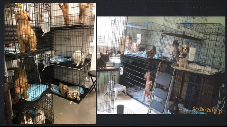 Georgia dog breeder tries to turn old ice cream store into kennel, issued violations for humane care