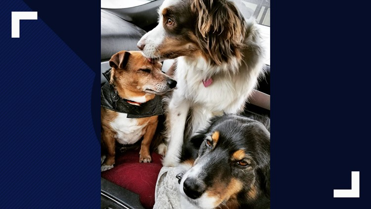 Susan Raney's dogs